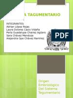 Origen Embriologico Del Sistema Tegumentario
