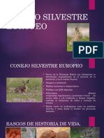 Conejo Silvestre Europeo