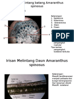 Irisan Melintang Batang Amaranthus Spinosus