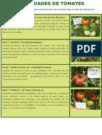 TOMATES VARIEDADES DE CANTABRIA