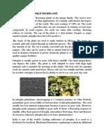 Cultivation & Processing of Jatropha Seeds