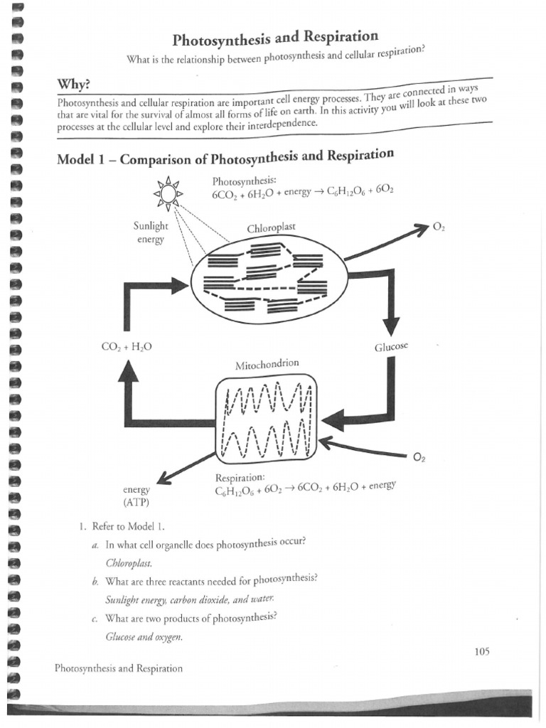 Photosynthesis and Cellular Respiration Review Worksheet Answer Key as well Synthesis Crossword Puzzle Answerey Biology Worksheet Answers also Cellular Respiration   studyres likewise photosynthesis respiration venn diagram   Solan ayodhya co further Photosynthesis and Respiration Worksheet Answers Types Of Synthesis besides Photosynthesis And Cellular Respiration Review Worksheet Answers moreover Photosynthesis   Cellular Respiration Worksheet furthermore Venn Diagram Photosynthesis and Cellular Respiration Admirable likewise Key   Worksheet Answer Photosynthesis Respiration Cellular moreover Cellular Respiration and Photosynthesis   Read     Biology   CK 12 besides  together with  moreover The Cycle Of Photosynthesis And Respiration Maintains The Balance Of additionally Photosynthesis and Respiration additionally Respiration and Photosynthesis KEY furthermore What Are Photosynthesis and Respiration    dummies. on photosynthesis and respiration worksheet answers