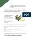 5 Remedios Caseros Contra El Acne