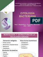 Citologia Bacteriana 2011