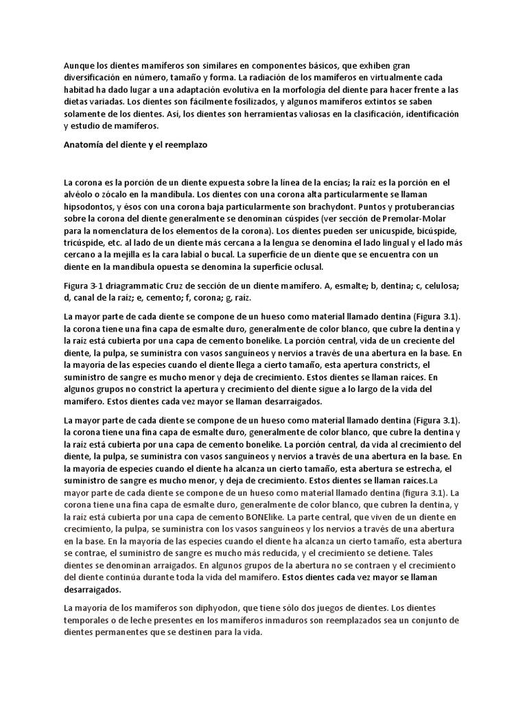 Increíble Dientes De Rata Anatomía Viñeta - Anatomía de Las ...
