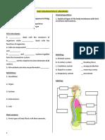 Worksheet - Human Anatomy - Nervous System