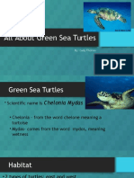 all about green sea turtles presentation