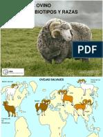 Biotipo y Razas ovinos