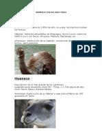 Animales en Peligro de Extinción Peru