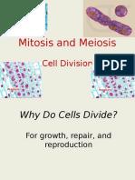 01 mitosis-meiosis