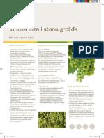 Vinova loza i stono grožde.pdf