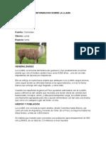Informacion Sobre La Llama