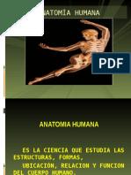 Organizaciòn Estructural Humana y Conocimiento Del Cuerpo Humano