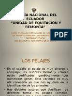 112838206-Capas-y-Senales-de-los-caballos.pptx
