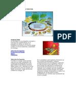 Ciclo de Producción Forestal