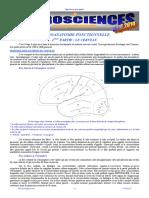 Neuro Anatomie Fonctionnelle II