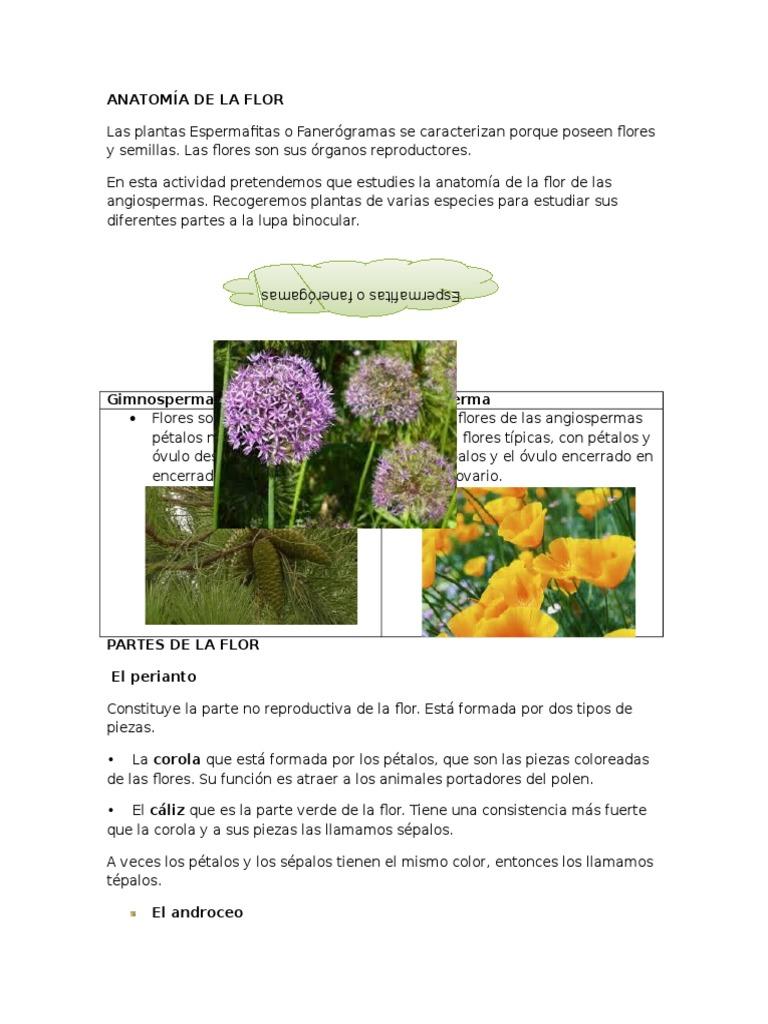 Atractivo Anatomía De Una Flor Festooning - Imágenes de Anatomía ...