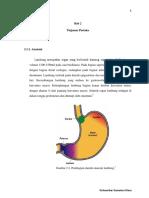 Anatomi Gaster 1