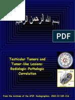 Tumors and Tumorlike Lesions of the Testis