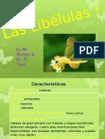 Libelulas !_! Taxonomia !