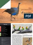Rockjumper Birding Tours 2016 Catalogue Insert