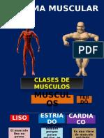 Musculos Torax 1