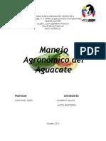 Generalidades Del Aguacate