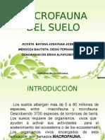 macrofaunadelsuelo-121213160746-phpapp01