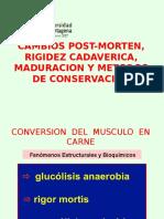 Cambios Post-morten, Rigidez Cadaverica, Maduracion,