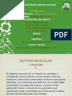 SISTEMA-MUSCULAR-DE-LOS-INSECTOS-completado.pptx