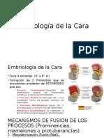 Embriología de La Cara