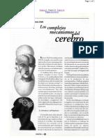 Los Complejos Mecanismos Del Cerebro ExactaMente