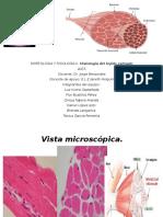 Histologia de Musculos