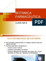 6 Botanica