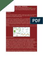 Patogenos Biomagnetic