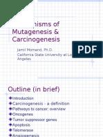 MechanismsofMutagenesis COH 02