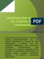 Vegetación de Chihuahua