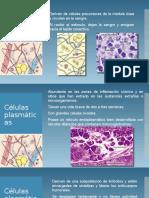 Introducción al estudio del tejido conectivo PARTE II.pptx