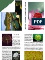 Booklet Victoria Amazonica Rikho Jerikho C24130014 English