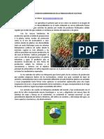 El Uso de Los Sustratos Hidroponicos en La Produccion de Cultivos
