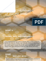 Gel Electrophoresis of Nucleic Acids