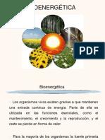 14. Bioenergética