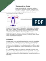 Anatomía de Los Dientes