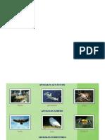 animales acuaticos, terreste y aeres.docx