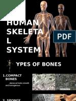Skeletal System New