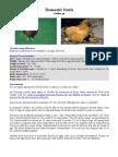 speciesnotes-domesticfowl