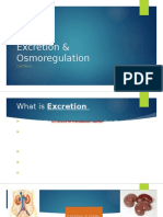 Excretion & Osmoregulation