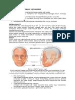 Panduan Anatomi Sistem Saraf