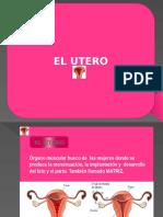 EL  UTERO