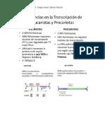 transcripción eucariotas procariotas